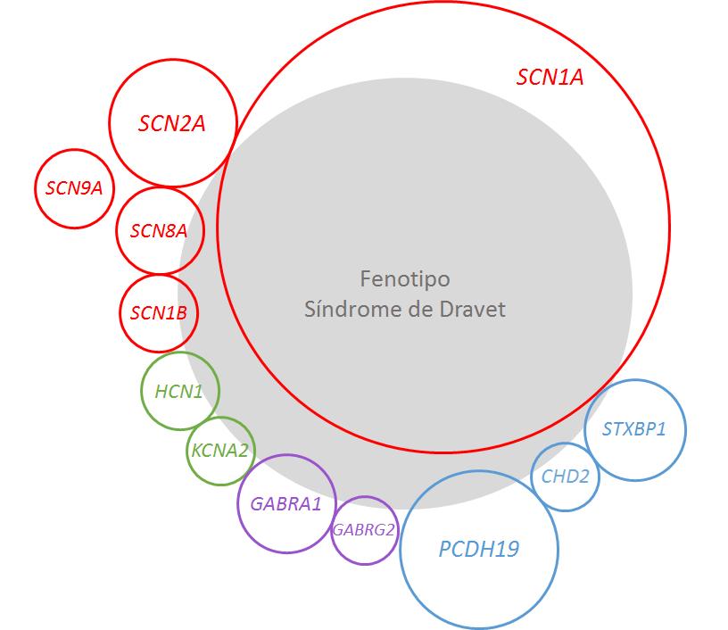 Gráfico epilepsias y genes relacionados con el síndrome de Dravet