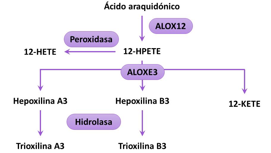 2021-04-08 mutaciones de ALOXE3